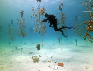 Photo © Coral Restoration Foundation